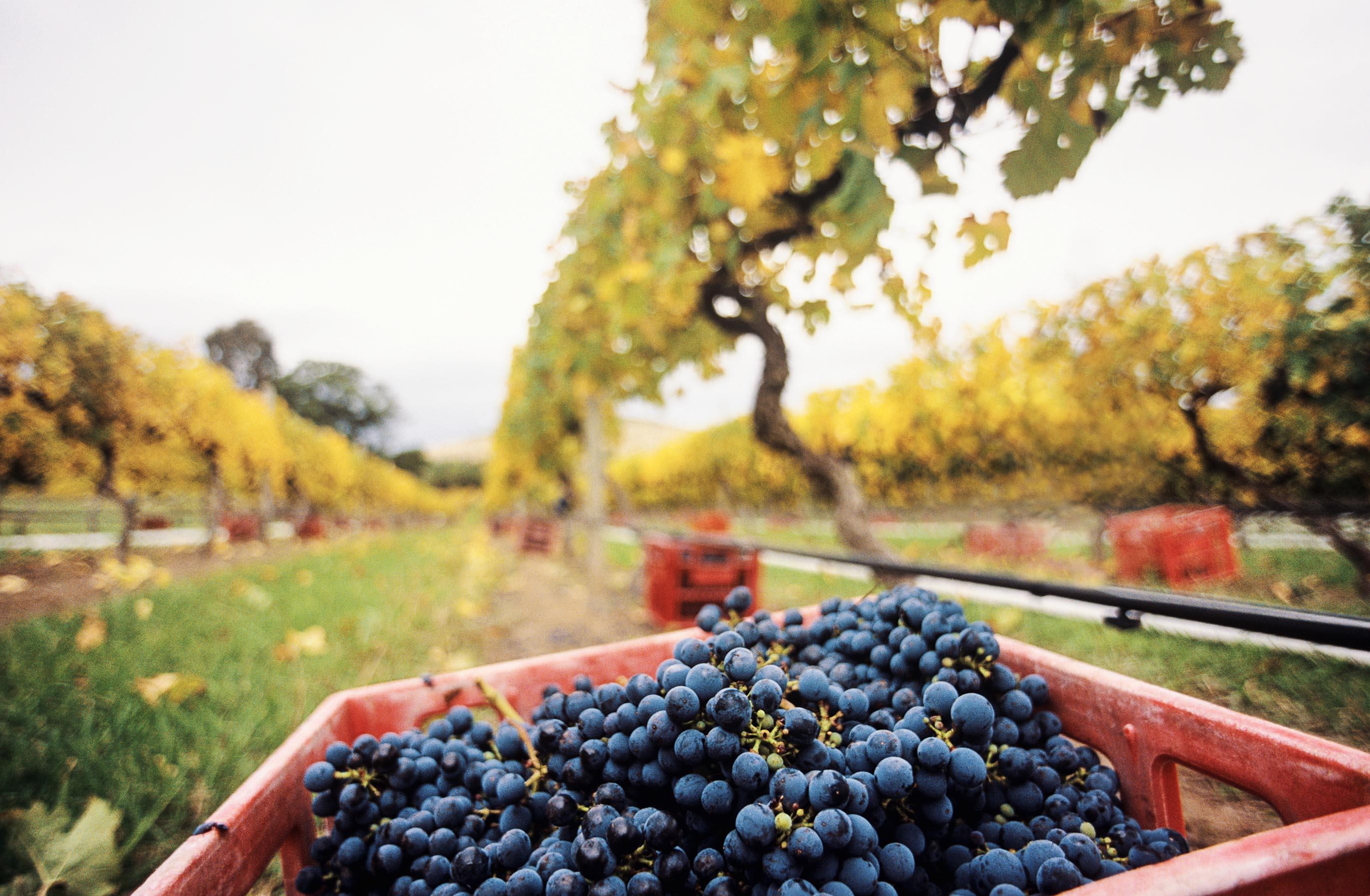 Top 3 wine regions to visit in Australia