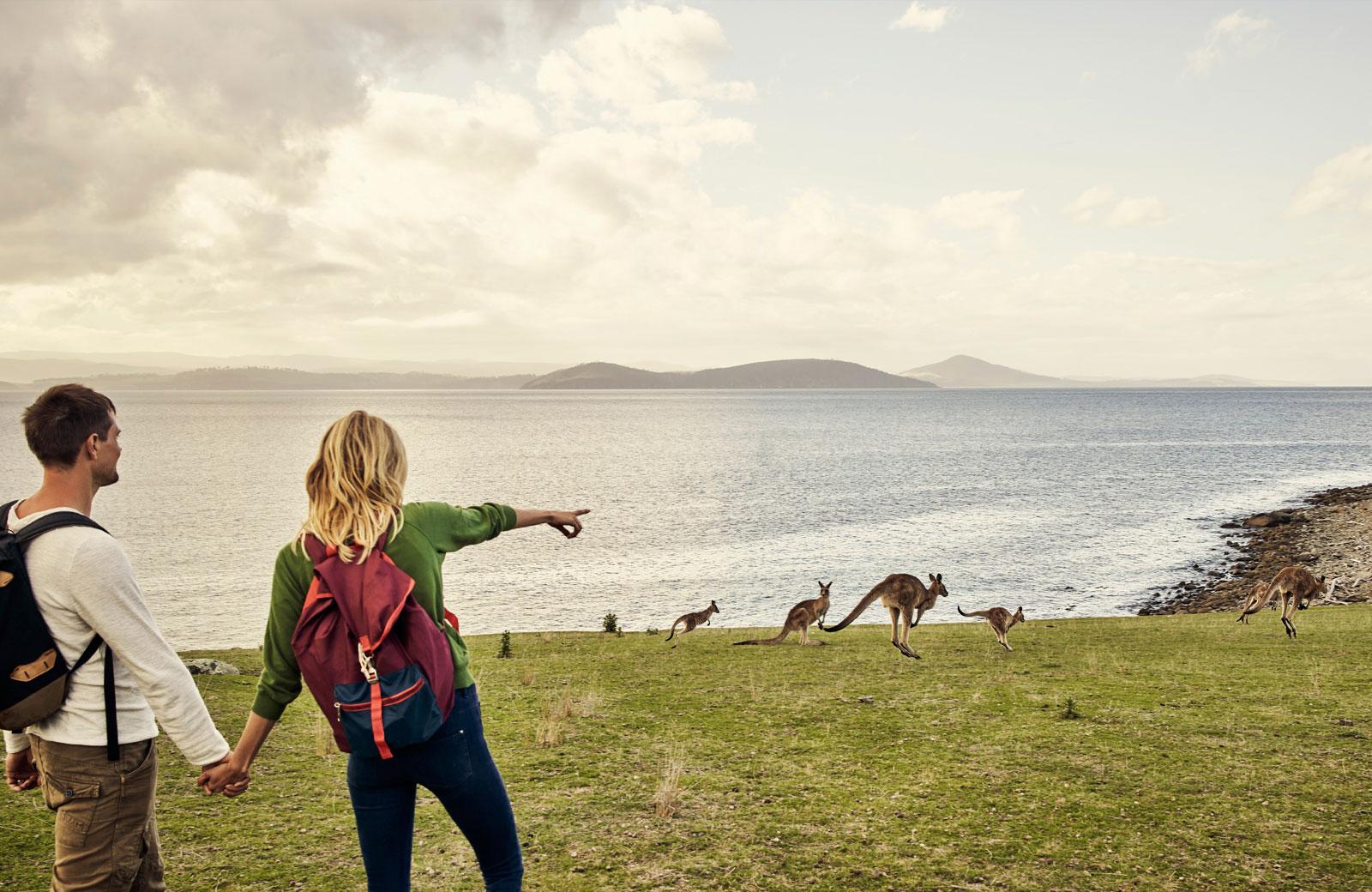 locum tenens in Australia looking at kangaroos