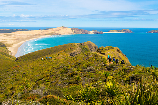 Northern tip of New Zealand