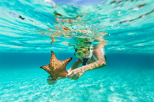 Scuba diver looking at a starfish