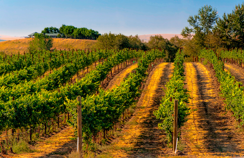Locum tenens in Walla Walla: Practicing medicine in rural Washington