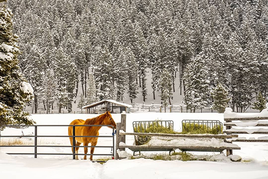 Horse and pasture in Montana winter